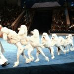 moscow-circus